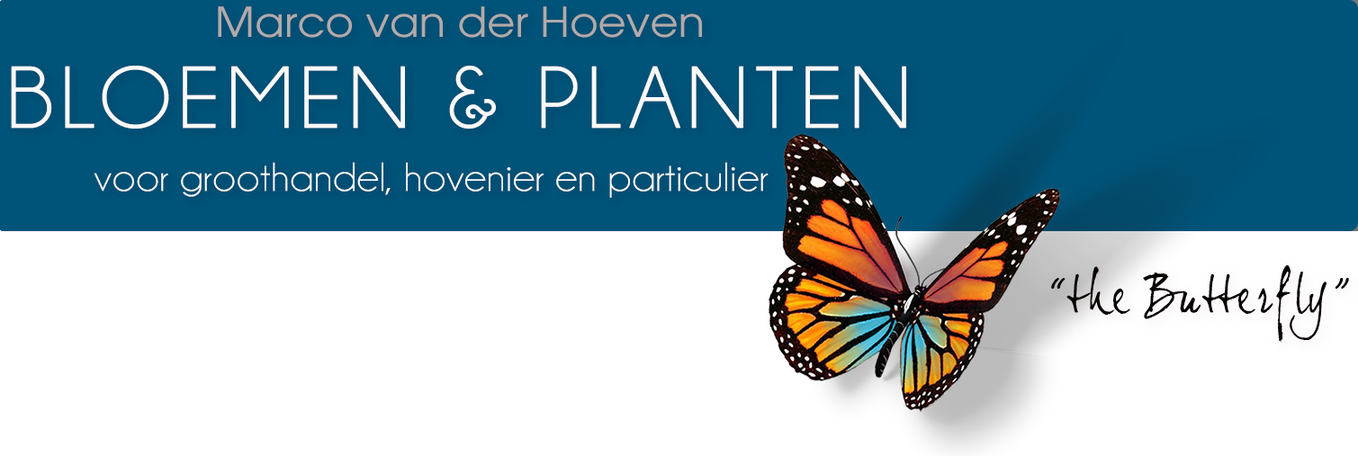 Marco van der Hoeven Bloemen en Planten voor groothandel, hovenier en particulier
